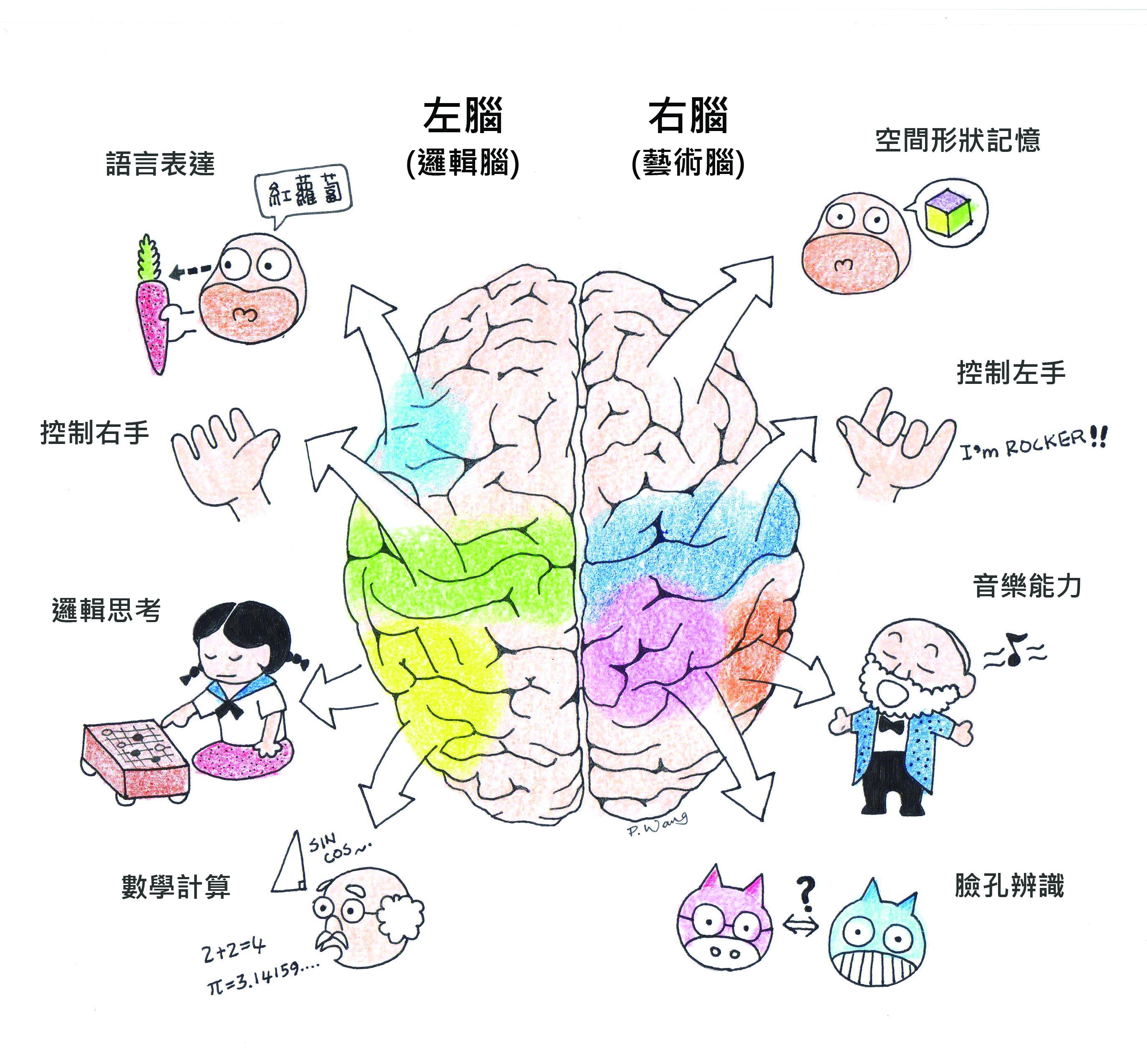 又擠又易怒又愛撒謊的腦─有趣的左腦